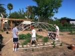 Boys scouts building hoop houses